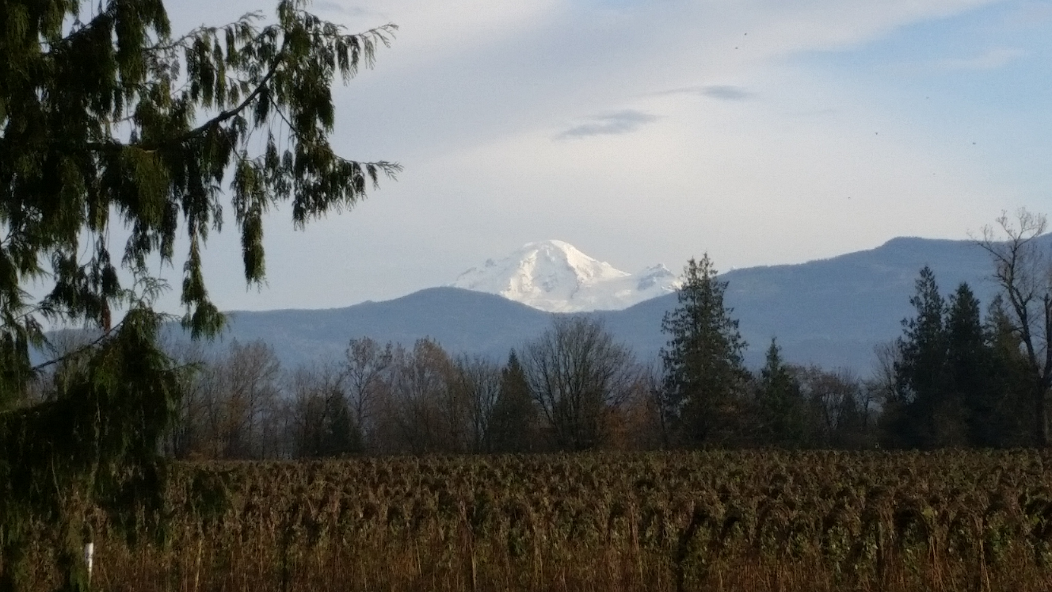 Mt Baker from our church parking lot